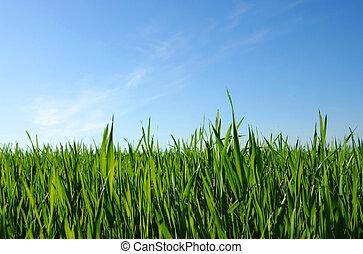 zöld pázsit