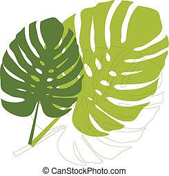 zöld, philodendron