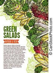 zöld saláta, skicc, transzparens, közül, friss, lap növényi