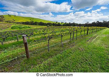 zöld, szőlőskert