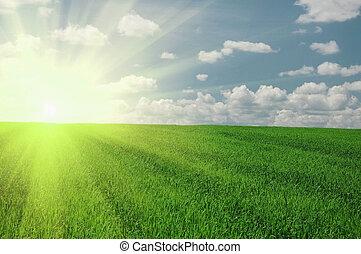 zöld terep, és, nap, ég