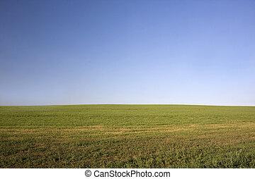 zöld terep, után, széna, betakarít, blue, ég