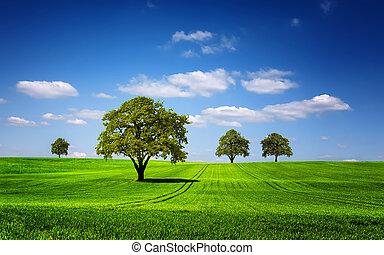 zöld, természet parkosít