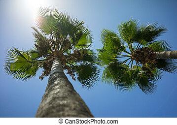 zöld, tropikus, kókuszdió pálma, bitófák, alatt, a, kék, napos, ég