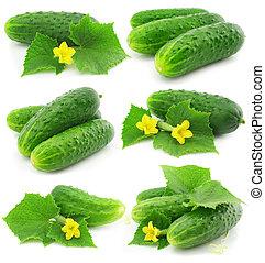 zöld, uborka, növényi, gyümölcs, noha, őt lap, elszigetelt