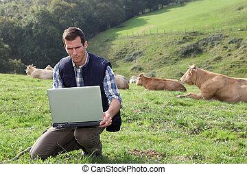 züchter, sitzen, in, vieh, feld, mit, laptop-computer