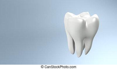ząb, bok, zdrowie