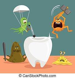 ząb, i, zarodki