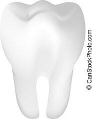 ząb, ilustracja, wektor