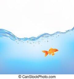 złota rybka, w, woda