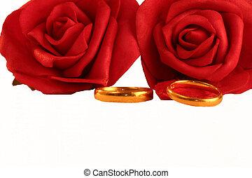 złoty, bandy, dwa, róże, ślub, czerwony
