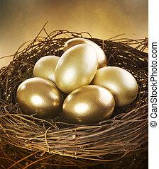 złoty, gniazdo, jaja