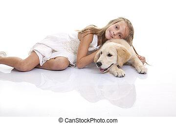 złoty labrador, pies