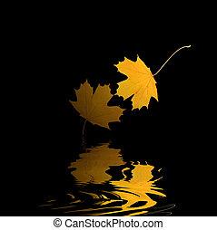 złoty, liść, odbicie