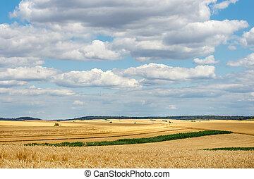 złoty, okolica, krajobraz, field., wole, lato
