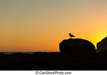 złoty, osobliwość, zachód słońca, zatoka