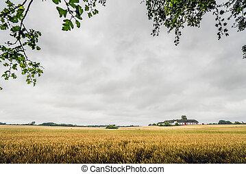 złoty, pochmurny, pole, pogoda, ziarno, wiejski