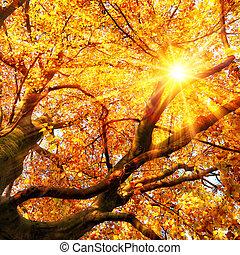 złoty, słońce, liście, jesień, przez, lustrzany