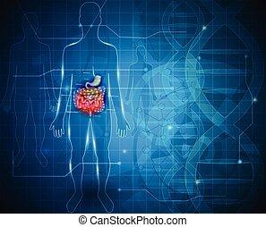 zaívací systém, lidský