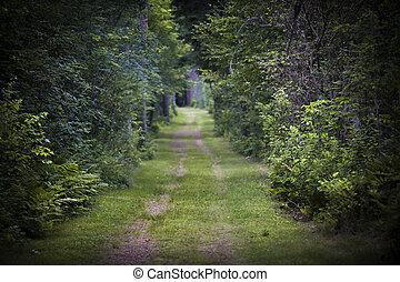 zaśmiecona droga, przez, las