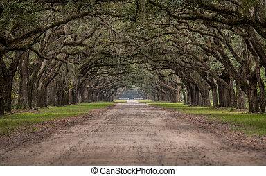 zaśmiecona droga, przez, tunel, od, żywy, dąb, drzewa