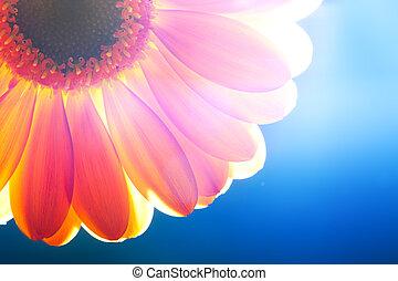 za, szczelnie-do góry, kwiat, światło słoneczne