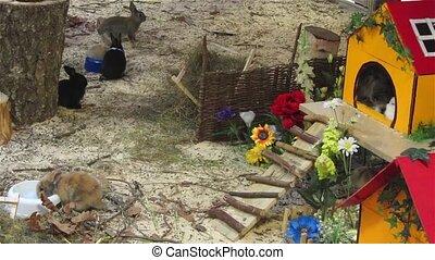 zabawa, padok, króliki, posiadanie