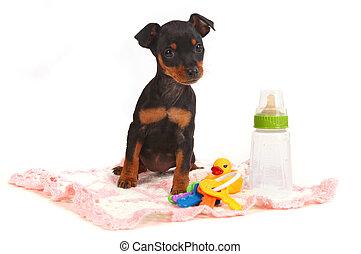 zabawka, doberman, pies, miniatura, bardziej zwęglony, ...