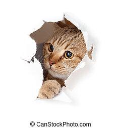 zabawny, otwór, papier, kot