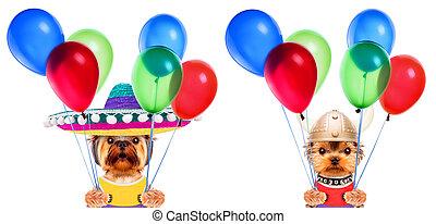 zabawny, pojęcie, dzierżawa, partia, balloons., psy