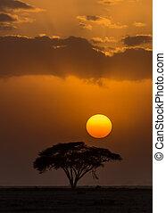 zachód słońca, amboseli