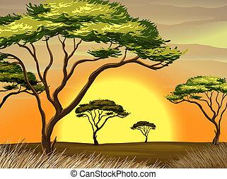 zachód słońca, las, prospekt