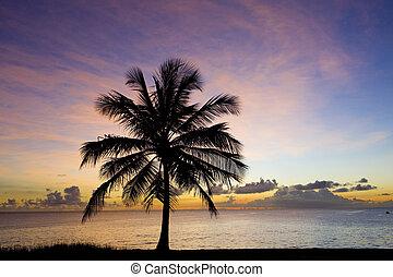 zachód słońca, na, karaibski, barbados, morze
