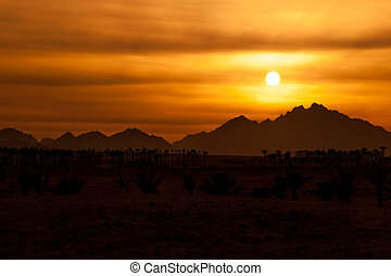 zachód słońca, w, pustynia, -, sahara, skaliste góry