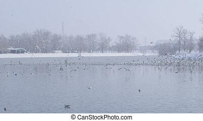 zagreb, jarun, lac, horaire hiver
