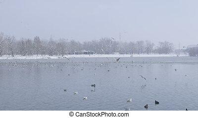 Zagreb jarun lake at winter time