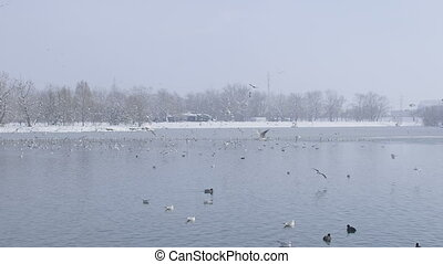 Zagreb jarun lake at winter time - Zagreb jarun lake. Winter...