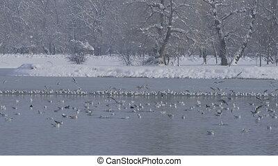 zagreb, jarun lake, winter time