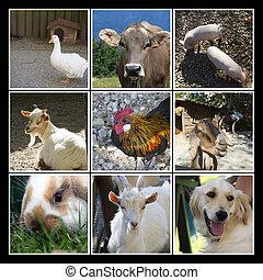 zagroda, collage, zwierzęta