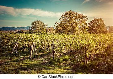 zagroda, rocznik wina, italy., tuscany, winnica, wino, sunset.