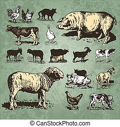 zagroda, rocznik wina, komplet, zwierzęta, (vector)