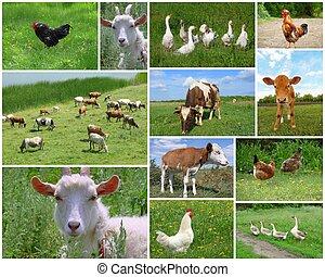 zagroda zwierzęta, i, ptaszki, collage