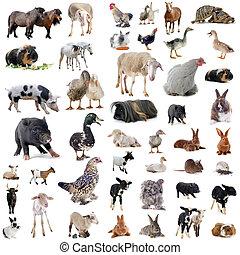 zagroda zwierzęta