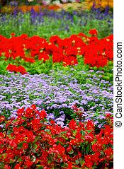 zahrada, kvetoucí