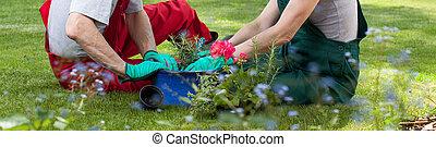 zahrada, volno