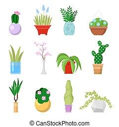 zajistit, domů, nechat na holičkách, set., ozdobný, houseplants, a, květiny, do, zasadit