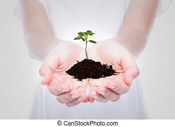 zakelijk, hand houdend, groene, kleine, plant