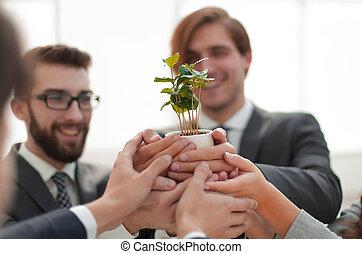 zakelijk, jonge, bomen, team, spruiten, optredens
