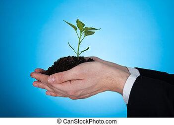 zakenman, beeld, sapling, vasthouden, bebouwd