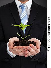 zakenman, sapling, het vertegenwoordigen, vasthouden, groei